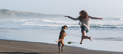 a girl and a dog play on the beach